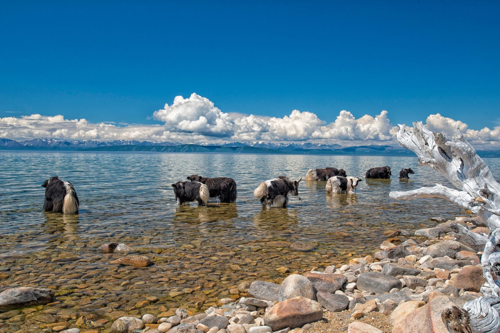 Mongolei-Reise: Zentralmongolei