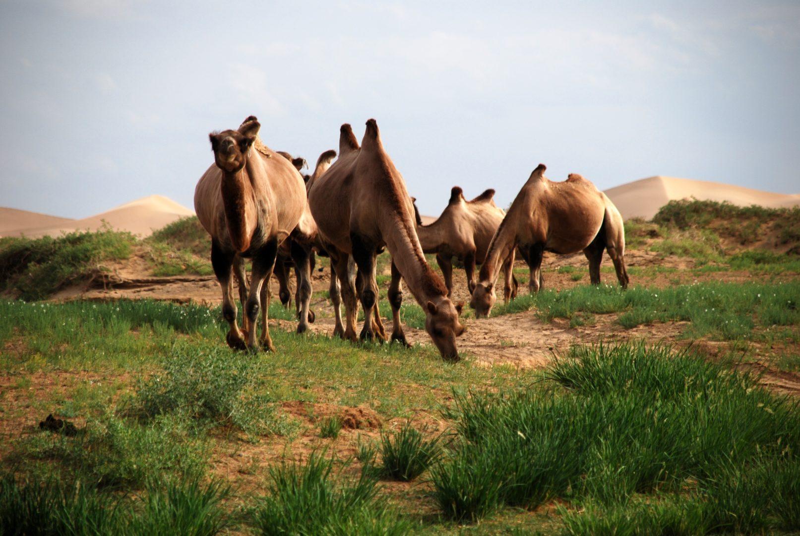 Tierparadies Mongolei