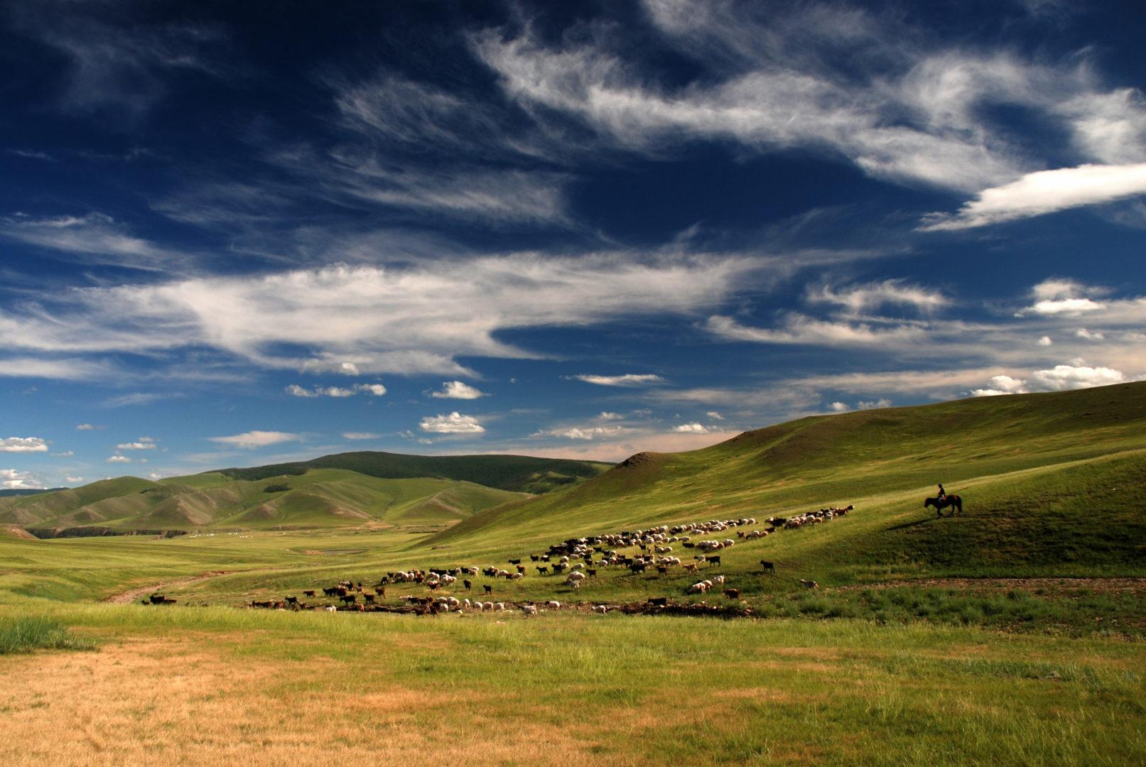 Schaf - und Ziegenherde