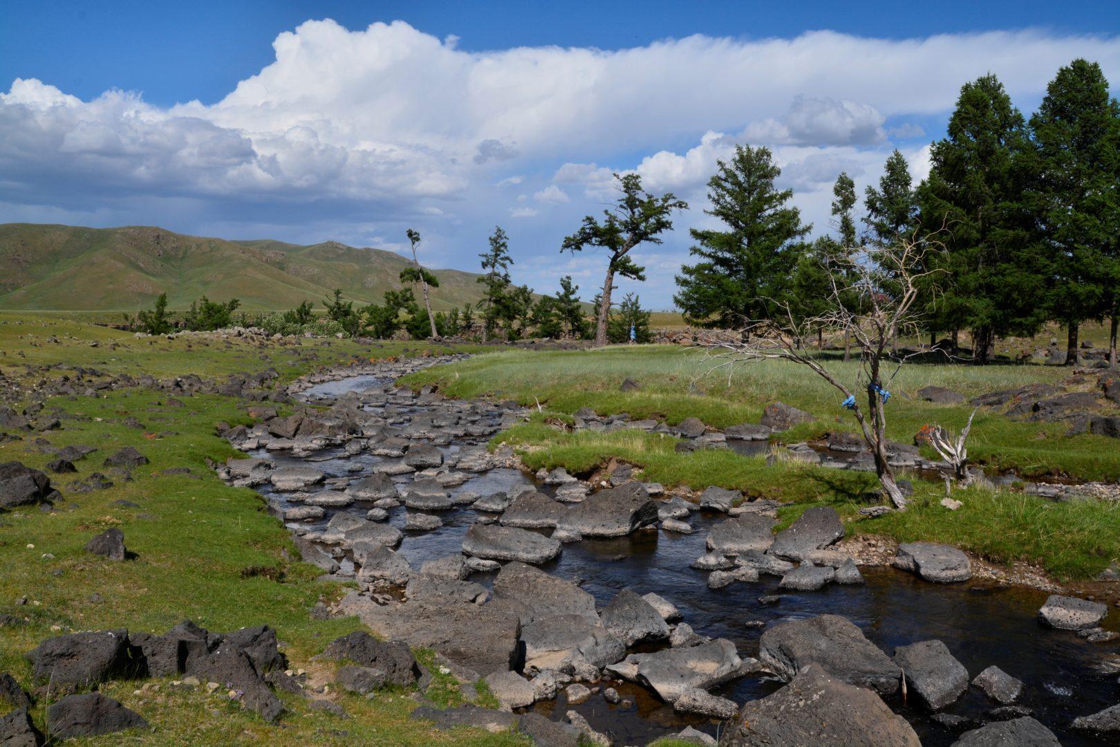 Gobi und Steppe: Steppe