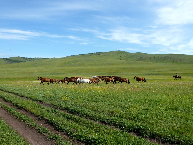 Pferdeherde in der Steppe