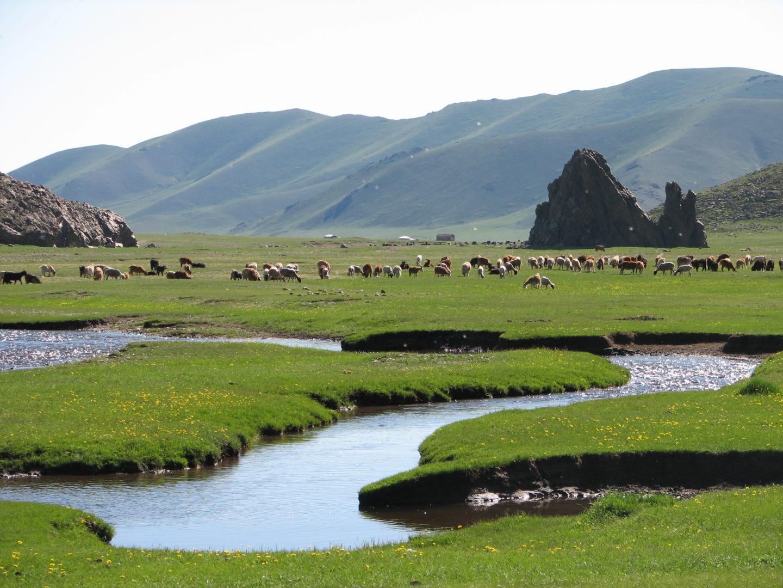 Mongolei - das Tierparadies