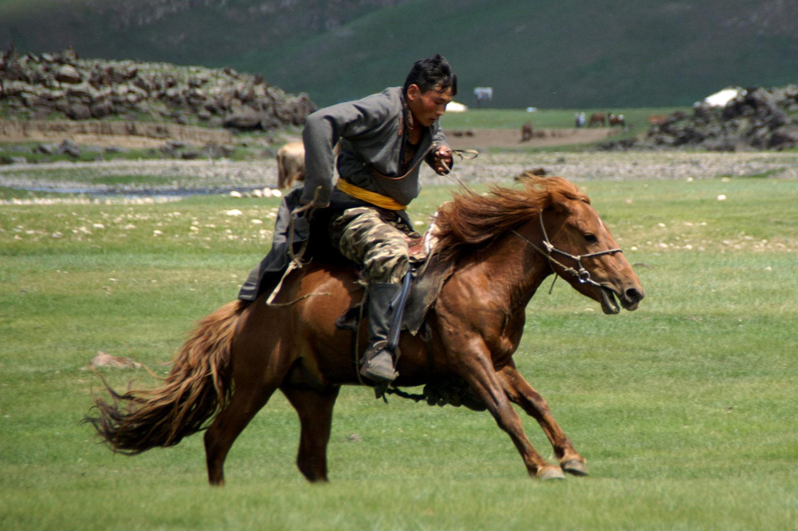 Einreiten eines Pferdes