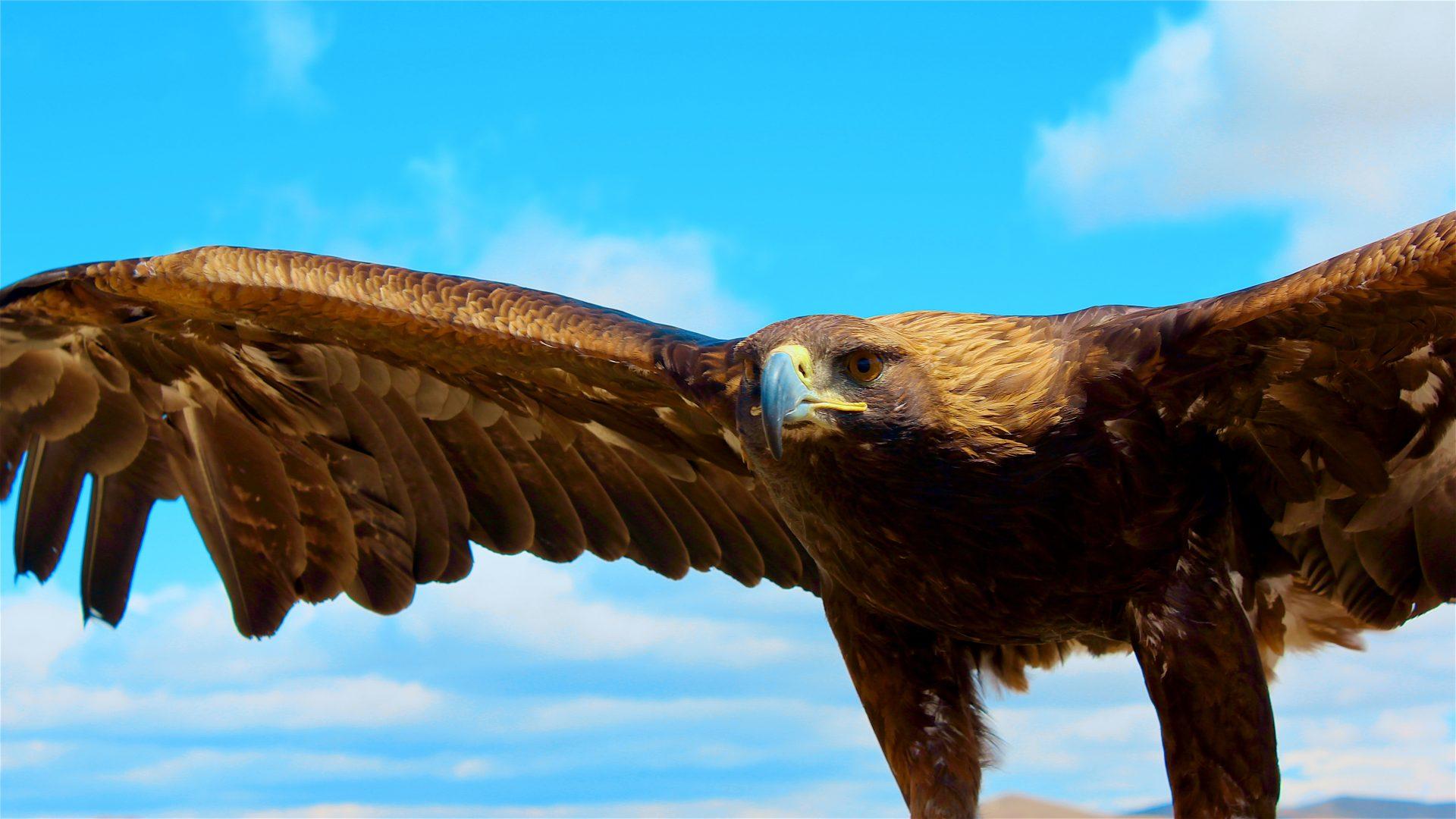 Mongolei-Reise: Adler